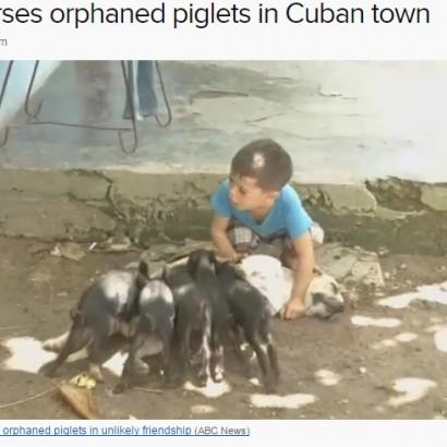 """【海外発!Breaking News】母になった犬 """"わが子のように""""子ブタにもお乳を与える(キューバ)"""