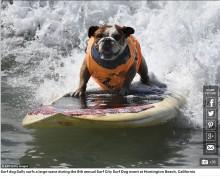 【海外発!Breaking News】犬だってサーフィン! 第8回「サーフ・シティー・サーフ・ドッグ」開催(米)