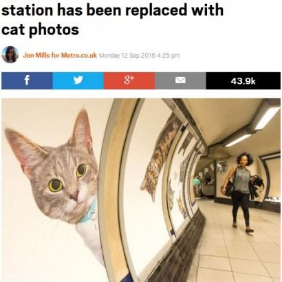 """【海外発!Breaking News】ロンドン市内にある駅構内の広告が全て""""猫""""に 里親探しにも一役"""