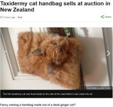 【海外発!Breaking News】道路で轢かれていた猫を剥製バッグに 賛否の嵐(ニュージーランド)