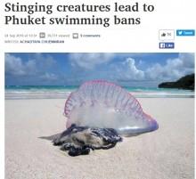 """【海外発!Breaking News】プーケットで猛毒・電気クラゲ""""カツオノエボシ""""見つかる 3か所のビーチで遊泳禁止に"""