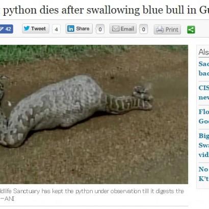 【海外発!Breaking News】ヘビ、赤ちゃんレイヨウを飲み込んで死亡 時にはこんなアクシデントも(印)