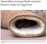 【海外発!Breaking News】UGGのブーツにヘビが潜んでいた! 「この時期は要注意」と駆除業者(豪)