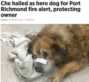 【海外発!Breaking News】「火事だ!」 飼い主に覆いかぶさりその命を救った犬(米)