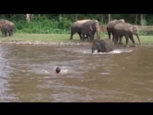 【海外発!Breaking News】タイの心優しい子象、溺れそうな男性を救出「早くこの鼻につかまって」<動画あり>