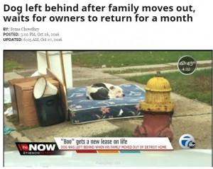 【海外発!Breaking News】引っ越しで置き去り ご主人の帰りを信じる犬 廃棄処分の家具に寄り添い1か月(米)