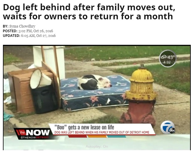 引っ越しで置き去りになったピットブルのミックス犬(出典:http://www.wxyz.com)