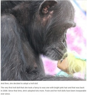 【海外発!Breaking News】動物実験で子どもを奪われたチンパンジー トロール人形を肌身離さず(米)