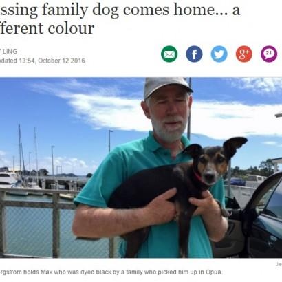 【海外発!Breaking News】毛を黒く染められ捜索困難に 行方不明の犬やっと飼い主のもとへ(NZ)