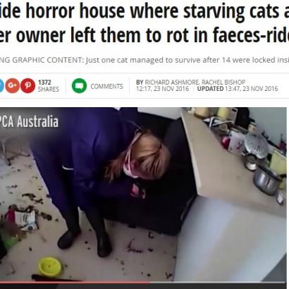 【海外発!Breaking News】ネコ14匹を室内に閉じ込め放置 共食いで多くが食べ尽くされる(豪)