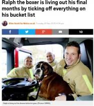 【海外発!Breaking News】バケットリストをこなす余命6か月の犬 「残された人生をハッピーに」(英)