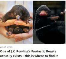 【海外発!Breaking News】ハリモグラの赤ちゃんが『ファンタビ』の魔法動物にそっくり!(豪)