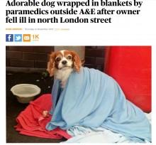 """【海外発!Breaking News】救急搬送された飼い主 愛犬は""""親切のリレー""""で飼い主と無事再会(英)"""