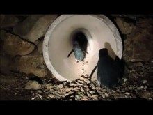【海外発!Breaking News】道路下にペンギン専用のトンネルが完成(ニュージーランド)<動画あり>