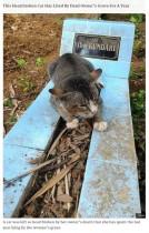 【海外発!Breaking News】飼い主のお墓のそばで 1年間暮らす猫(インドネシア)