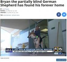 【海外発!Breaking News】保護センターに残っていた最後のジャーマン・シェパードに新しい家族が見つかる(米)
