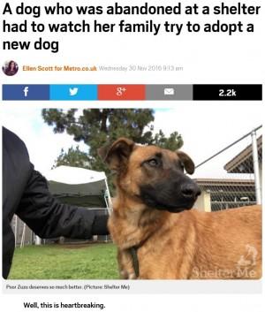 【海外発!Breaking News】保護された迷い犬 飼い主が見つかるも「別の犬を引き取りたい」と裏切られる(米)