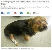 【海外発!Breaking News】誘拐され激しい暴行のうえ顔を焼かれた子犬、それでも人間を信じる(英)