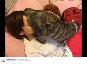 """【エンタがビタミン♪】しょこたん、愛猫""""ショコラ""""のお尻を嗅ぐ姿が「猫仙人!」"""