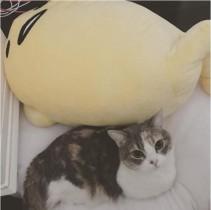 【エンタがビタミン♪】たかみなの愛猫がぐでたまとコラボ 可愛い眼差しに癒される