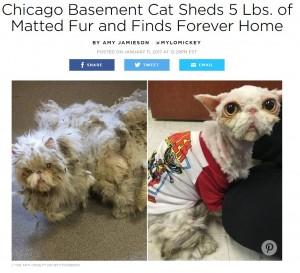 【海外発!Breaking News】放置され2キロの毛の塊に覆われていた猫 保護されてすっきり(米)