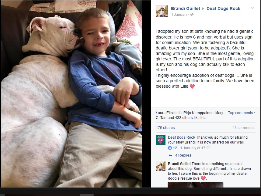 言葉を話せない少年と聴覚障害のある犬(出典:https://www.facebook.com/brandiand.connor)