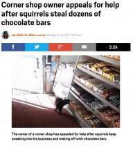 リスにチョコバーを盗まれ続ける店主 ツイッターで吐露「何とかして」(カナダ)