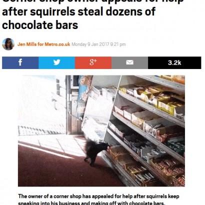 【海外発!Breaking News】リスにチョコバーを盗まれ続ける店主 ツイッターで吐露「何とかして」(カナダ)