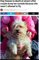 【海外発!Breaking News】犬の搭乗を拒否された夫婦 空港の外に置き去り凍死させる 「悪魔のような夫婦」に制裁を求める署名集まる(露)