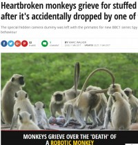 【海外発!Breaking News】赤ちゃん猿の死を悲しむ群れの姿 ロボットの隠しカメラが捉える(印)<動画あり>