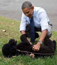 【イタすぎるセレブ達】オバマ大統領の愛犬が少女の顔に噛みつく 数針縫う怪我で傷は免れず