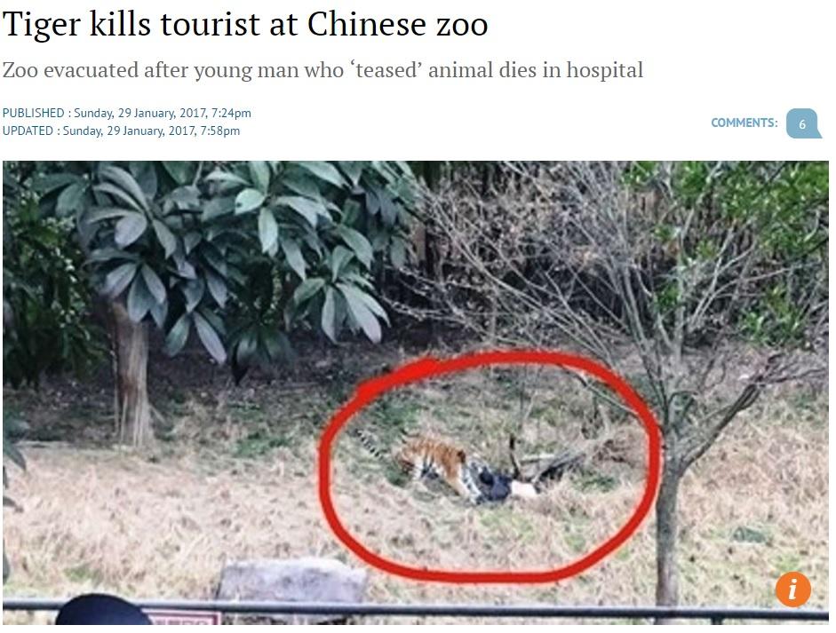 観光客、動物園のトラに襲われる(出典:http://www.scmp.com)