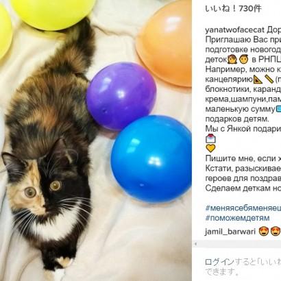 【海外発!Breaking News】4つのテイストが美しいキメラ猫 顔は茶トラとクロ、首はシロ、体はサビ(ベラルーシ)