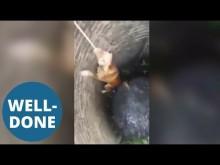 【海外発!Breaking News】深さ6mの井戸に落ちた犬 ロープを噛み這い上がる姿にハラハラ(タイ)<動画あり>