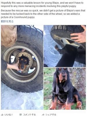 【海外発!Breaking News】タイヤのホイールに頭がスッポリはまった子犬 消防隊員により救出(米)