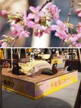 相葉雅紀&風間俊介の「花見こたつ」を体験 こたつで桜・ビール・グルメを楽しむイベントに行ってみた