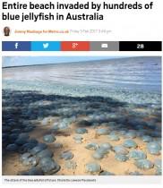 【海外発!Breaking News】豪ブリスベンの美しい浜辺が大量のクラゲで埋め尽くされる!
