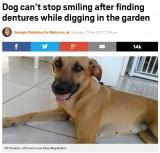 """【海外発!Breaking News】裏庭から""""お宝""""を見つけた犬 総入れ歯でニッコリ(ブラジル)"""