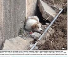 【海外発!Breaking News】IS戦闘員の遺体は犬やニワトリのエサに イラク・モスル東部で