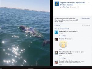 【海外発!Breaking News】人間にTシャツを着せられ泳ぐイルカ 「窒息死の危険性あり」と懸命に捜索中(豪)