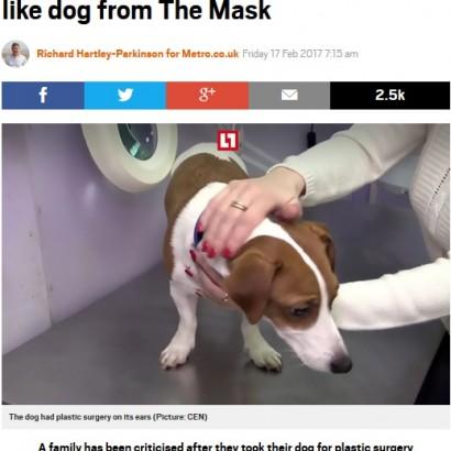 【海外発!Breaking News】「耳が垂れていた方が可愛いから」 犬の耳を整形した飼い主に猛批判(露)