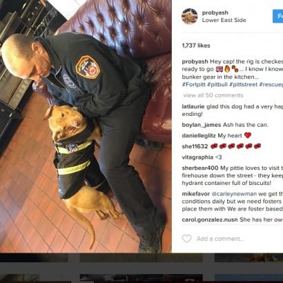 【海外発!Breaking News】虐待され栄養失調で放置されていたピットブル、現在は消防署が新しい家に(米)