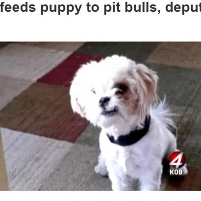 【海外発!Breaking News】隣家のシーズー犬を誘拐 獰猛なピットブル2頭にエサとして放った男を逮捕(米)