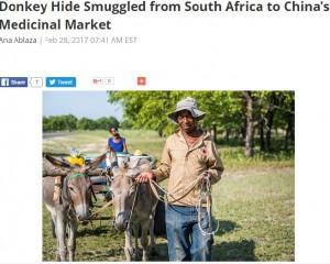 【海外発!Breaking News】中国の漢方用にロバ300頭分の皮を持ち出そうとした男、空港で逮捕(南ア)