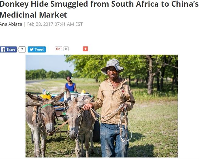 ロバの需要が急増している南アフリカ(出典:http://en.yibada.com)