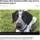 【海外発!Breaking News】逃走した空港の見習い探知犬、警察官に射殺され猛批判の声(ニュージーランド)