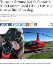 【海外発!Breaking News】「重症の愛犬を助けたい」ヘリコプターに乗せ、300km先の病院へ通った飼い主(英)