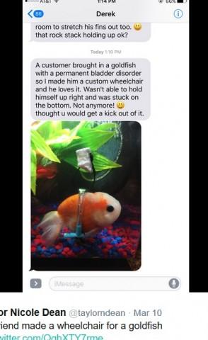 【海外発!Breaking News】まっすぐ泳げない金魚に補助器をつけた男性に称賛の嵐(米)