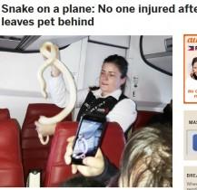 【海外発!Breaking News】ベテランCA、アラスカ上空で大蛇を捕獲!