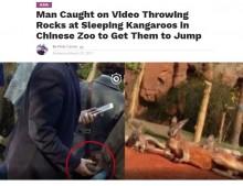 【海外発!Breaking News】「ダラダラせず飛び跳ねろ」 いい写真を撮りたいと男がカンガルーに投石(中国)